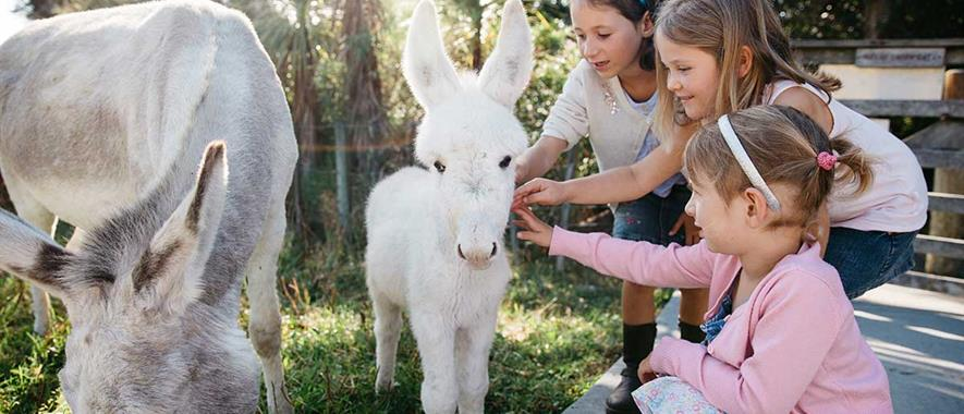 Three young girls petting a baby donkey in a paddock.
