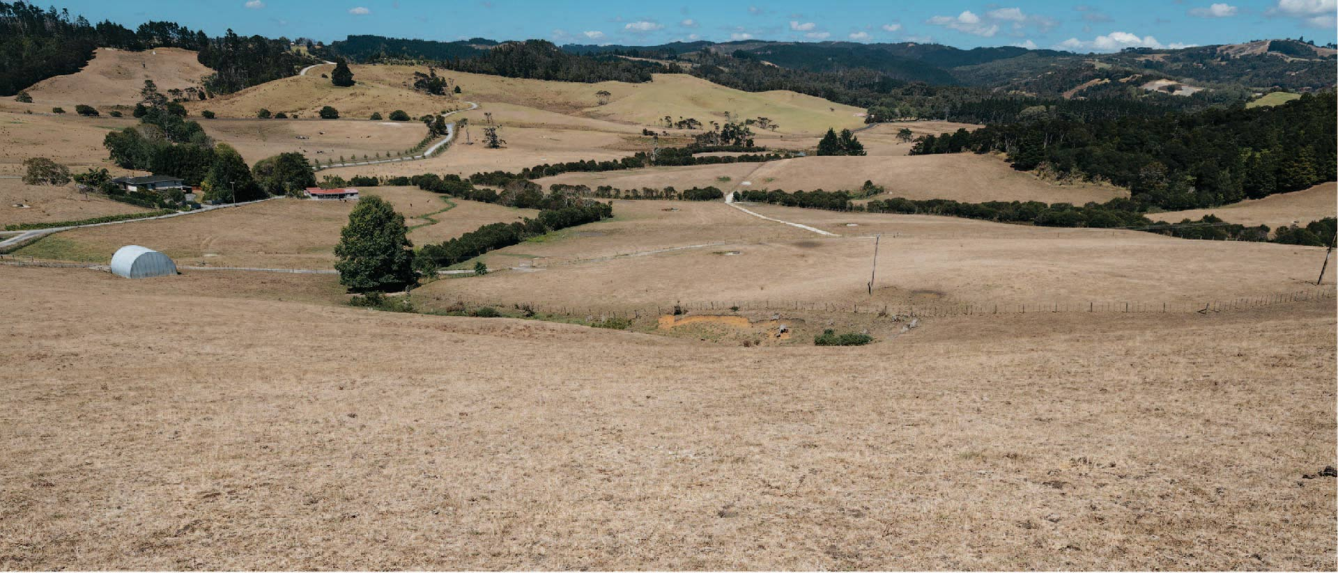 Dry grass on pastures in Warkworth caused by drought.
